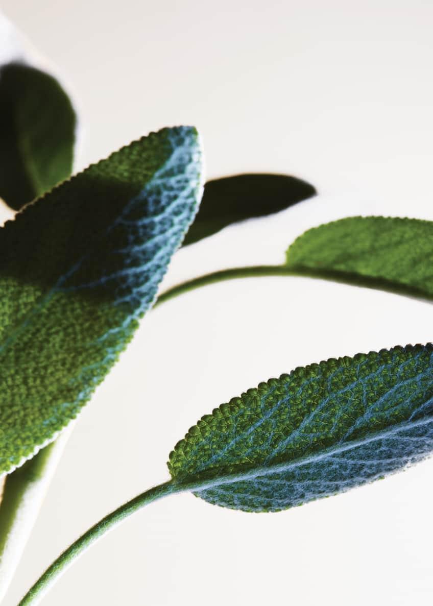 Bottega Veneta Parco Palladiano XV Salvia Blu Eau de Parfum, 3.4 oz./ 100 mL - Bergdorf Goodman