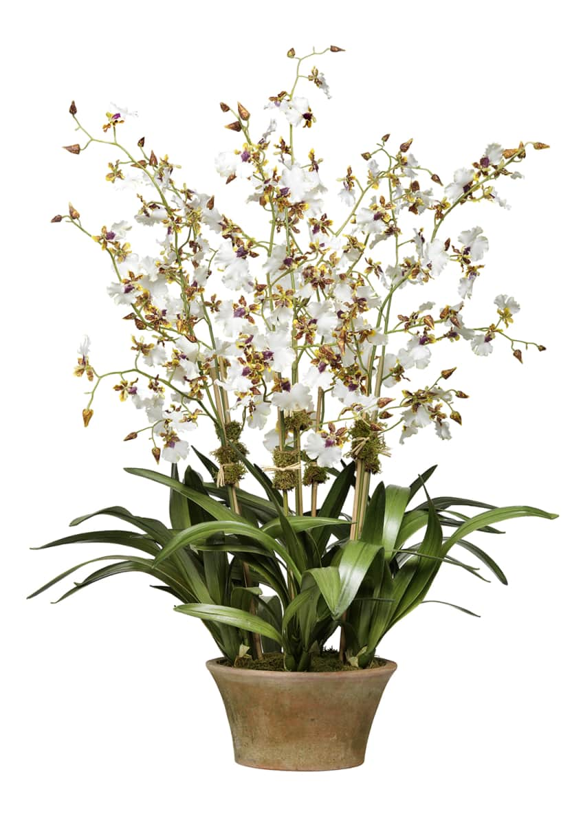 Diane James Cream Dancing Orchid in Terra Cotta