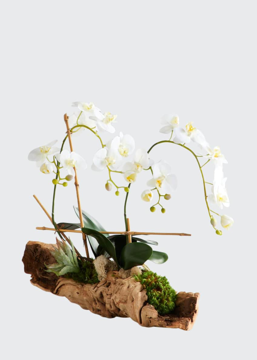 Image 1 of 1: Organic Woody Orchids Arrangement