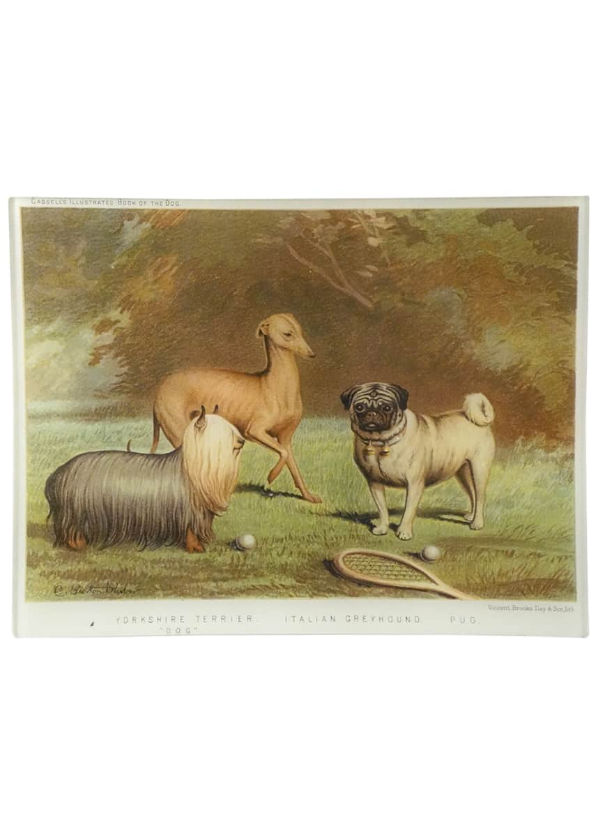 John Derian Yorkshire Terrier Italian Greyhound Pug Tray
