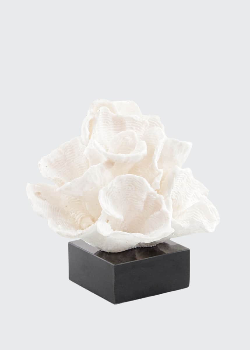 John-Richard Collection Foliose Coral on Black Marble Base